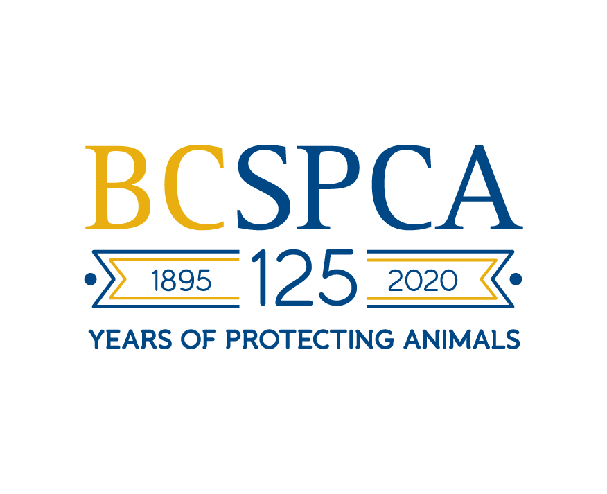 bcspca pets illustration graphic design designer vancouver cary debenham